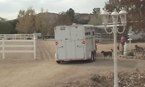 Esta vaca estaba desconsolada por haber perdido a su bebé, hasta que algo increíble ocurrió