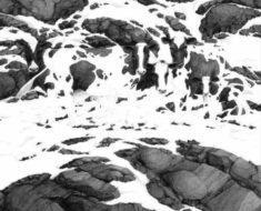 Reto Visual: Encuentra Las Cinco Vacas