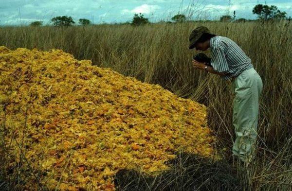 Este bosque pudo regenerarse por completo gracias a las cáscaras de naranja