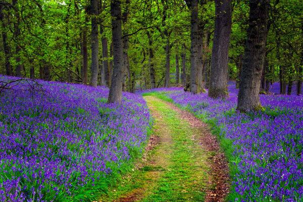 10 lugares por los que Escocia ha sido votado el país más bonito del mundo