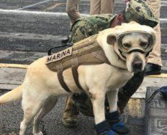 Esta perrita se ha convertido en una heroína para todo México