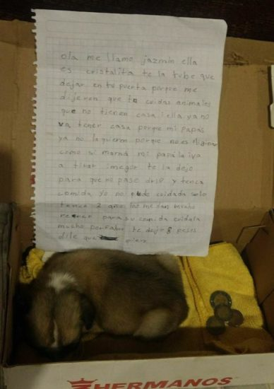 La conmovedora carta de una niña que fue obligada a abandonar a su mascota