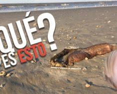 La espeluznante criatura que el huracán Harvey dejó en una playa de Texas