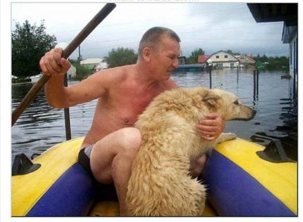 Lo que este perro hizo durante la inundación te dejará sin palabras