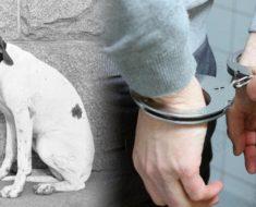 Panamá aprueba pena de cárcel para todas las personas que torturen o maten a mascotas