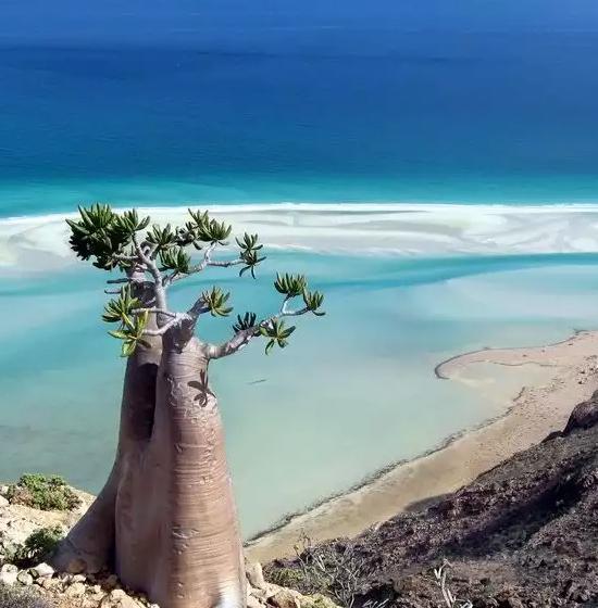 Socotra La Isla Donde Habitan Las Especies M S Raras Del Mundo Coyotitos