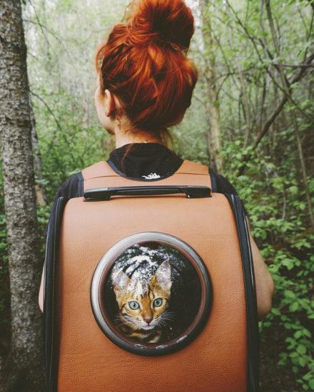 suki el gatito viajero