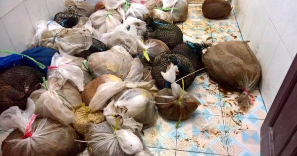 La aduana oye gritos de ayuda de las bolsas de plástico, luego descubren lo terrible en el sótano del hombre