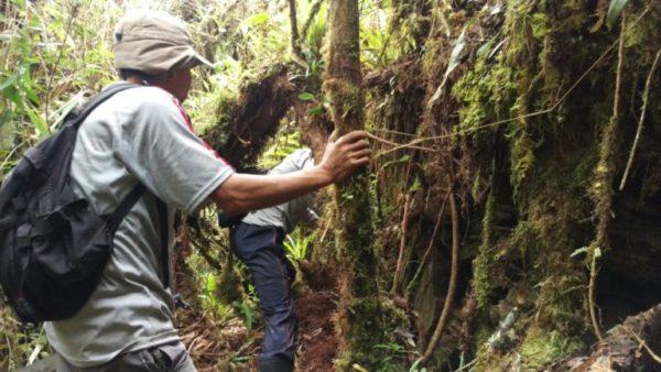 Hallaron una antigua y desconocida ciudad inca en las selvas de Perú