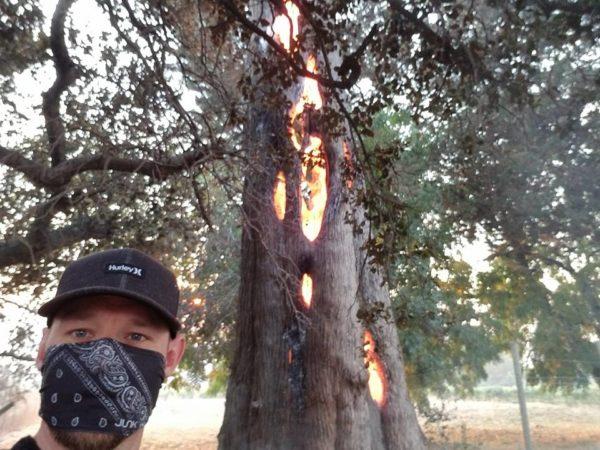 ¡Increíble! Graban un árbol que se incendia únicamente por dentro