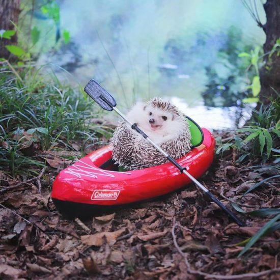 Todo el mundo se ha enamorado de este pequeño erizo que se fue a acampar