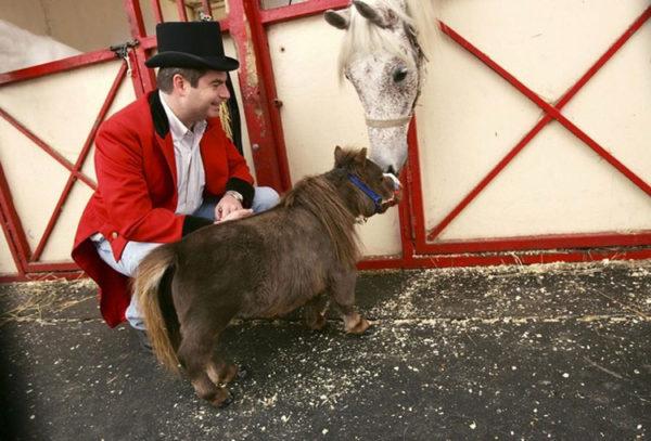 Este pequeño caballo ha roto todos los récords del mundo y te robará el corazón