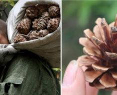 Los vecinos se burlaban de él cuando recogía semillas de pino… Ahora ven a su jardín como una obra de arte