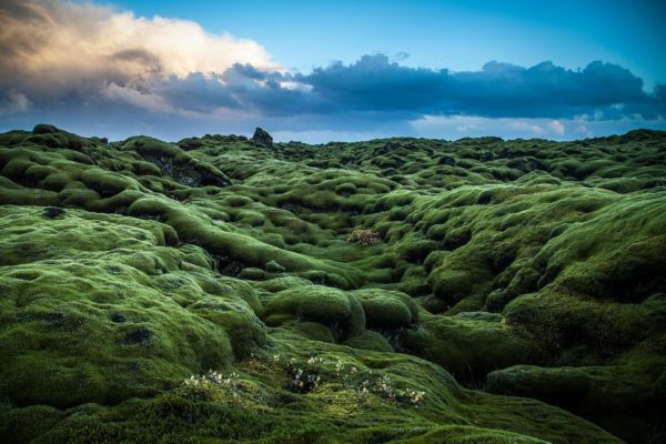 Eldhraun, los increíbles campos de musgo en Islandia