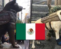 En México y Japón se han hecho estatuas en honor a Frida y los otros perros rescatistas