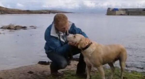 Internet se enamora de un perrito que se baña todos los días en el océano para verse con su mejor amigo