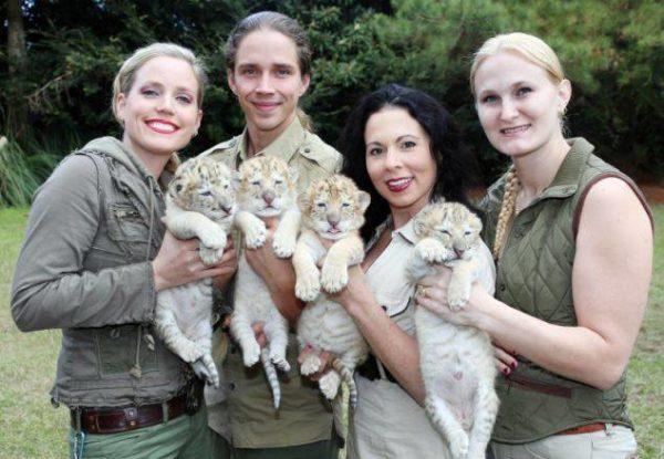 León blanco y tigresa blanca tuvieron cachorros y son extremadamente lindos y únicos