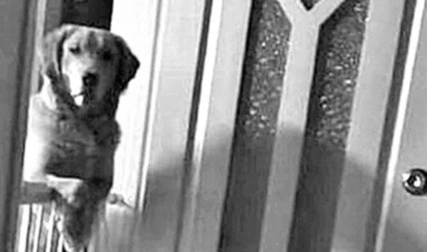 Ellos descubrieron que su perro no dormía por las noches y sólo los miraba. La razón fue espantosa