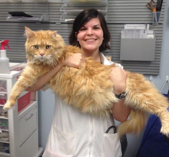 Empresa ofrece trabajo de abrazar gatitos todo el día - Esta es la razón