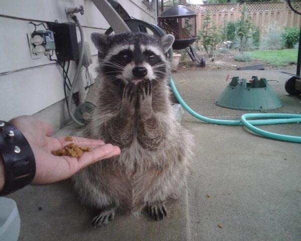 fotografias de animales tiernos