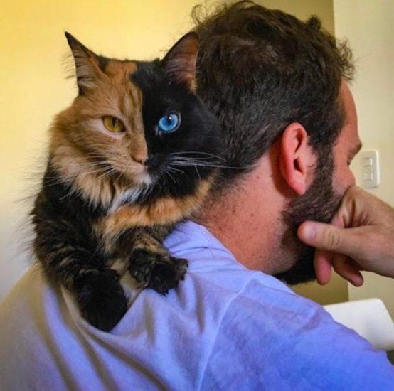 Gatos con dos caras, el misterioso caso de los animales quimera