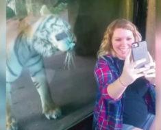 Mujer embarazada se toma foto con el tigre y este reacciona cuando descubre que está embarazada