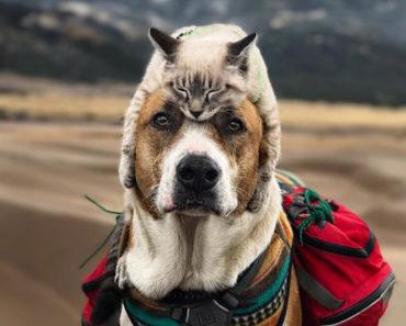 Este gato y perro aman viajar juntos, y sus imágenes son absolutamente enternecedoras