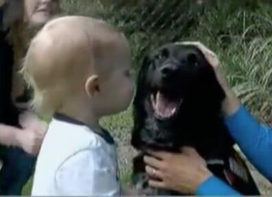 Perro gruñe y ladra a la niñera – cuando los papás descubren la verdad quedan horrorizados