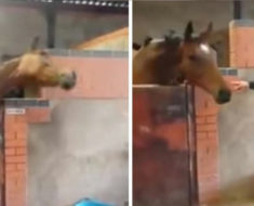 La criadora baila al son de su canción preferida en el establo, pero ahora mira el contrataque del caballo