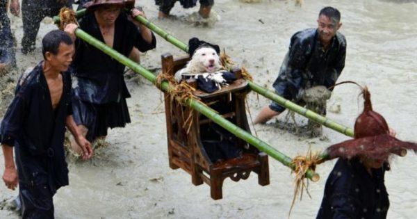 El pueblo en el que el perro es un Dios