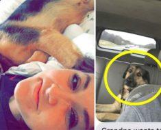 Hija deja que su padre cuide a su perro el fin de semana – queda en shock al recibir este mensaje de texto