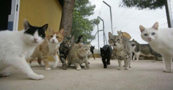 Una anciana fue arrestada por entrenar a sus 65 gatos para robar joyas de los vecinos