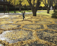 Cada año un empleado de la universidad rastrilla hojas creando impresionantes obras de arte