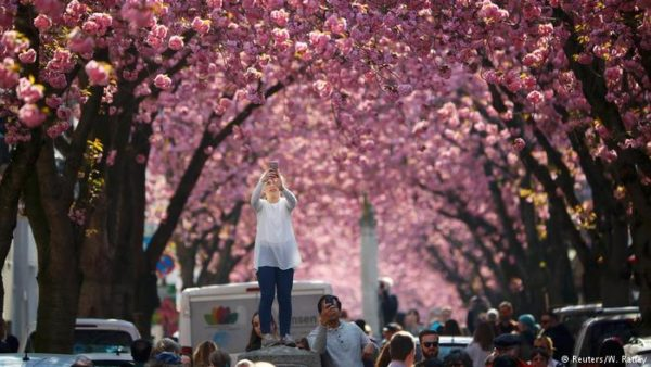 Conoce la calle en Alemania que se convierte en un túnel repleto de flores