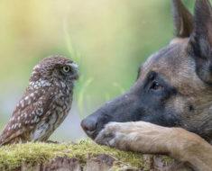 La historia en imágenes de la enternecedora amistad entre Ingo el perro y su gran amigo, el búho