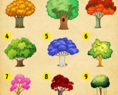 Dime cuál árbol te gusta más y te diré un gran secreto de tu personalidad y futuro