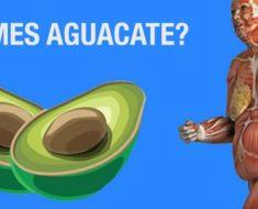 Esto ocurre en tu cuerpo cuando comes aguacate a diario