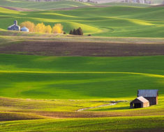 Los coloridos campos de Palouse en Washington