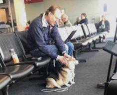 Perra se acerca a extraño en aeropuerto, entonces él revela secreto que deja a dueña conmocionada
