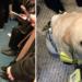 Nadie cede un asiento a pasajero ciego – pero su perro guía da una gran lección a los humanos