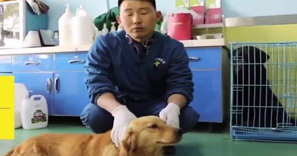Tras ser rescatado de un mercado de carne, este perro agradeció a sus salvadores con lágrimas