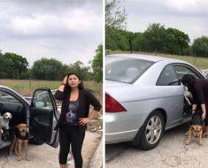Sale del auto y abandona 4 perros – Cuando la graban hace lo peor y se va sin remordimiento