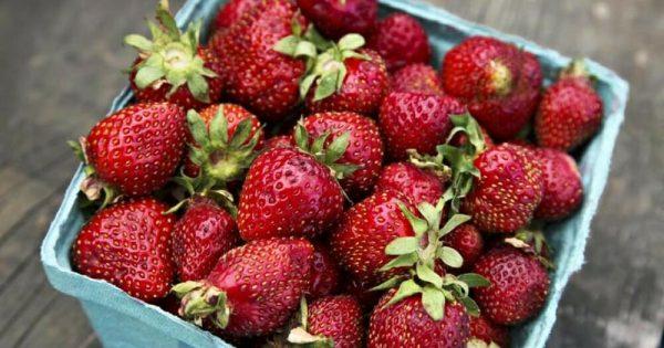 Mantener las fresas frescas es fácil con estos consejos de los agricultores