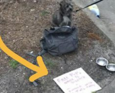 Perro es abandonado en la calle, a su lado se encontraba esta triste carta