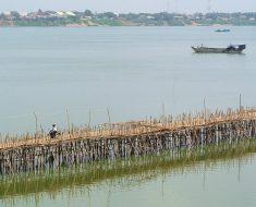 Este puente de bambú se construye y desmonta cada año en Kampong Cham