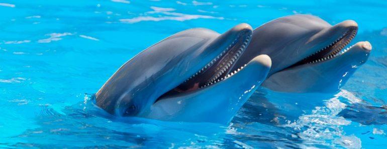dolphin discovery miembro alliance los cabos