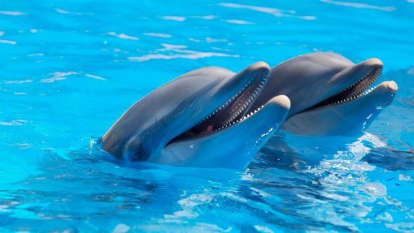 nadar con delfines aquaventuras puerto vallarta